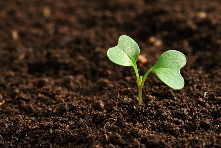 How To Ensure That Your Plants Are In A Healthy And Fertile Soil