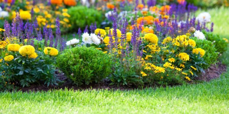 Types of Spring Flowers To Plant in Your Garden That Bloom All Season